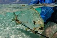 Rybaření Seychely
